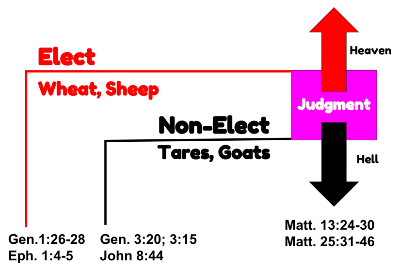 Can your briefly explain election in Romans 8:29-30?